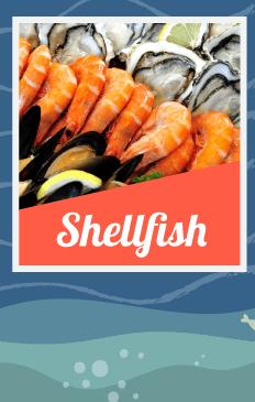 Shellfish Prawn-Oyster